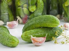 Огурцы соленые в горячей заливке с мятой